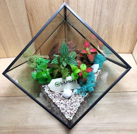 Customized Jennett Garden Themed Tropical Fittonias & Pilea Square Geometric Terrarium by Lush Glass Door Singapore