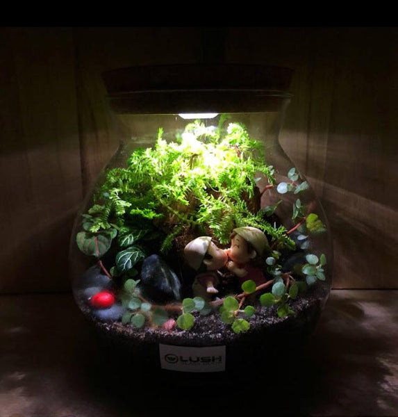 Customized First Date Themed Fittonia Terrarium with Light (Large) by Lush Glass Door Singapore