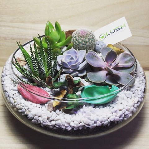 Customized Lovely Maryann Succulents Arrangement Mid Range Terrarium by Lush Glass Door Singapore
