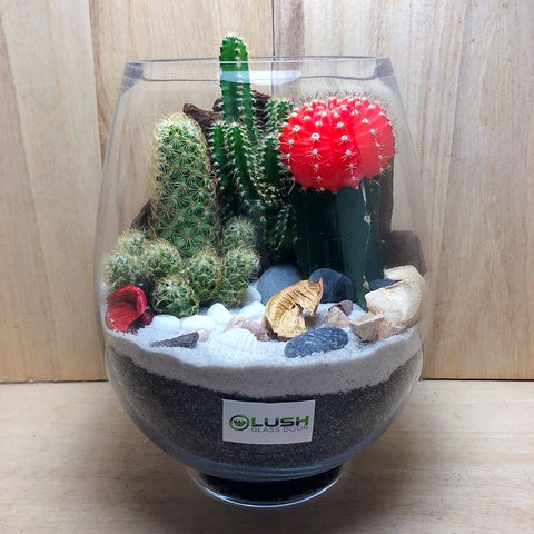 Customized Crimson Gold Desert Cactus Terrarium by Lush Glass Door Singapore