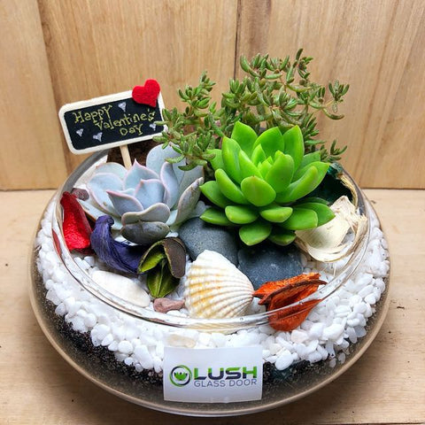 Customized Alluring Gracelyn Succulents Arrangement Mid Range Terrarium by Lush Glass Door Singapore