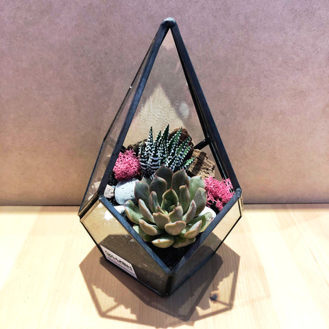 Eloise Succulents Arrangement in Teardrop Geometric Terrarium
