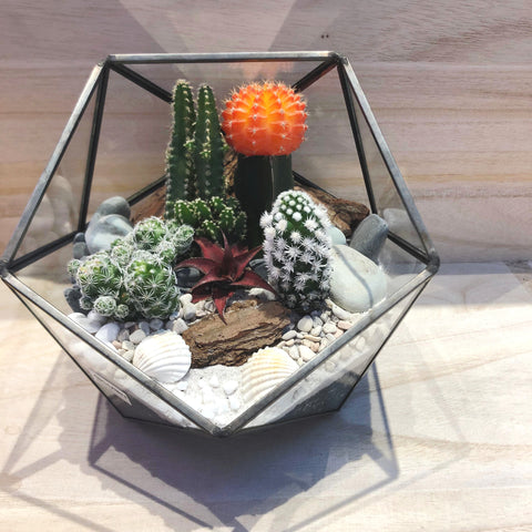 Customized Desert Cactus Themed Ball Shaped Geometric Terrarium by Lush Glass Door Singapore