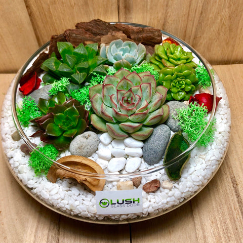 Lovely Freya Succulents Arrangement Mid Range Terrarium by Lush Glass Door Singapore