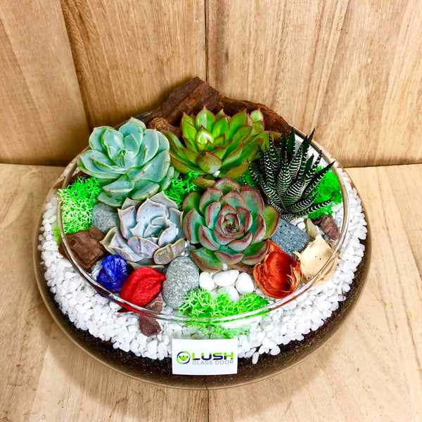 Lovely Athena Succulents Arrangement Mid Range Terrarium by Lush Glass Door Singapore