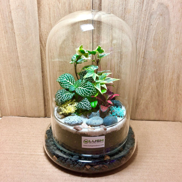 Customized Damani Mini Forest Dome Terrarium (L) by Lush Glass Door Singapore