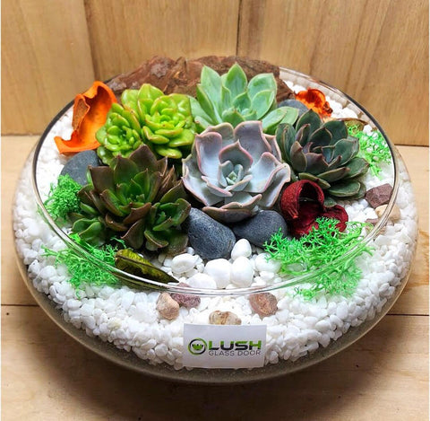 Customized Lovely Ginevra Succulents Arrangement Mid Range Terrarium by Lush Glass Door Singapore