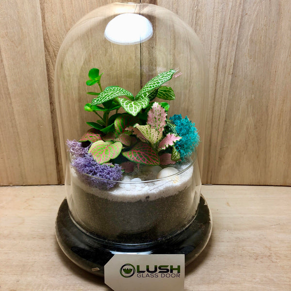 Customized Finbar Mini Forest Dome Terrarium (L) by Lush Glass Door Singapore
