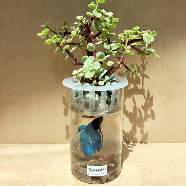 Mairéad Succulent Cylindrical Fish Aquarium by Lush Glass Door