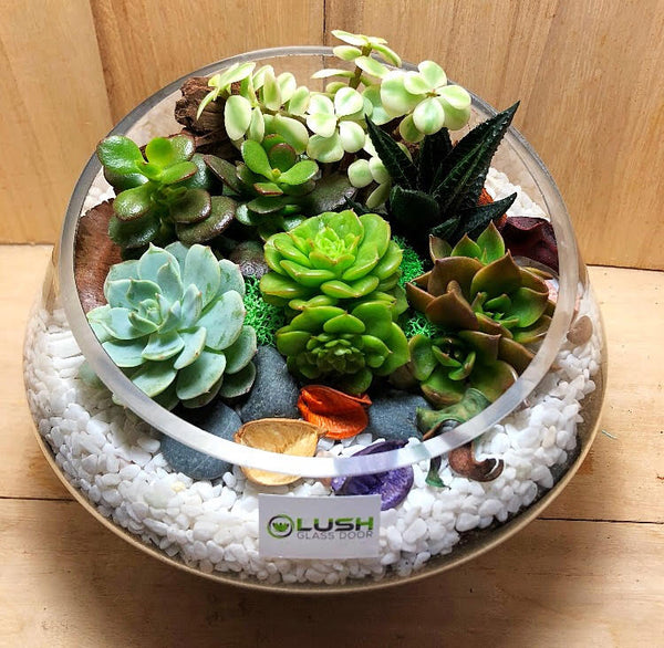 Customized Aspen Garden Themed Succulents Premium Terrarium by Lush Glass Door Singapore