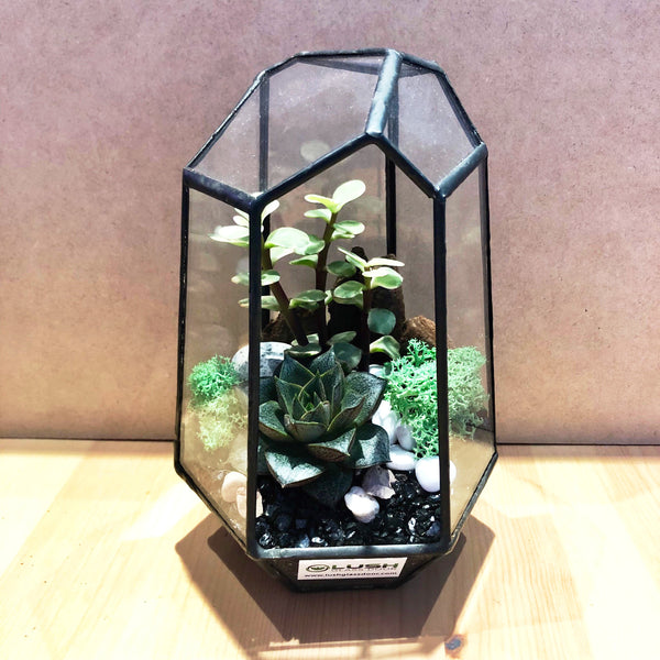 Fanella Succulents Arrangement in Diamond Shape Geometric Terrarium by lush glass door