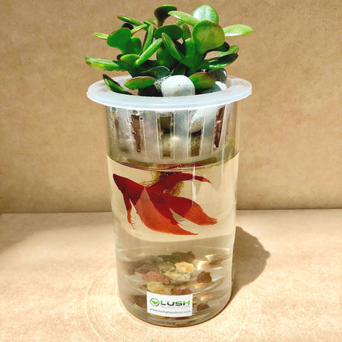 Cass Succulent Cylindrical Fish Aquarium by Lush Glass Door