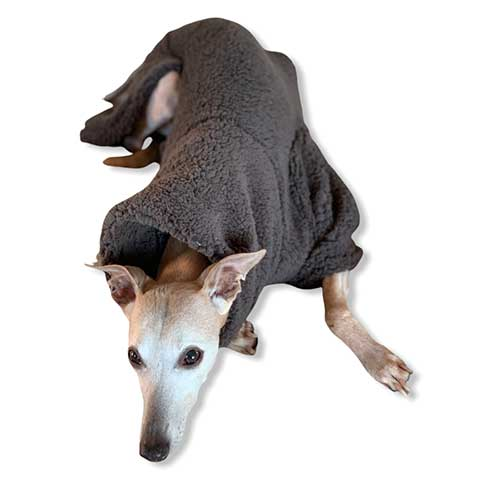 joey the whippet enjoying his twilight years in comfort and style in this extra soft, fluffy jumper by drydogs