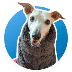 make your dog smile like Joey this winter. Keep them warm and snug in this extra fleece sighthound jumper with legs