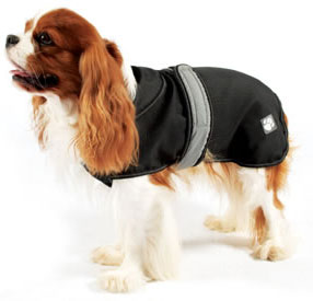 cavalier king charles spaniel dog coat