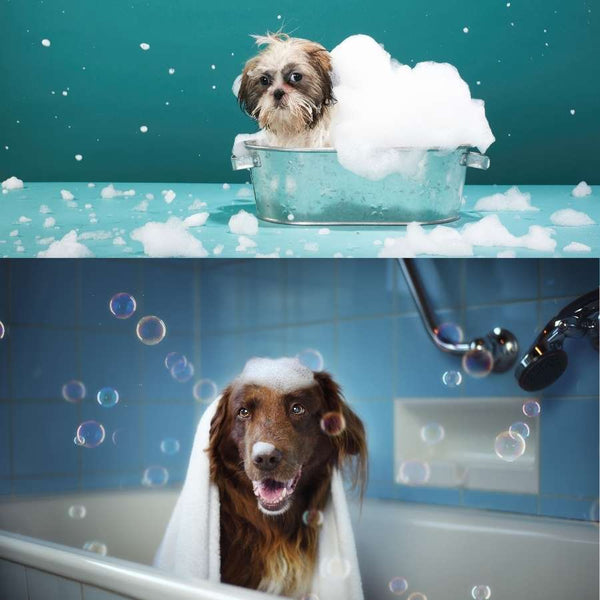 doggy bath time. natural soap for dogs and other pets