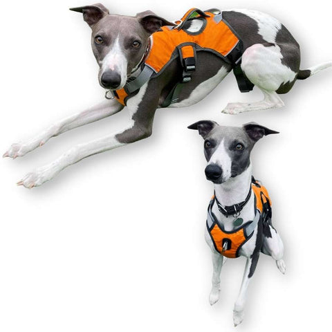 lurcher whippet greyhound harnesses. Our best selling sighthound dog harness.