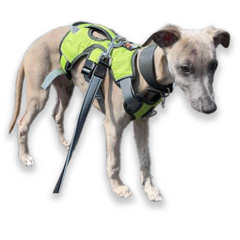puppy wearing our green escape proof harness