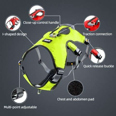 Features of our multi-point lead attachment sighthound harness