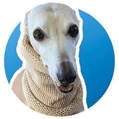 whippet snood