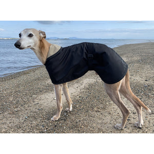 Whippet by the sea wearing a lightweight whippet rain coat