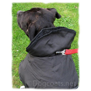 dog coat with turn up collar and hole for lead to go through