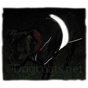 reflective safety dog coat on staffordshire bull terrier