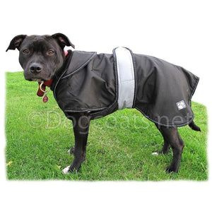 staffordshire bull terrier coats - black on tia in a field