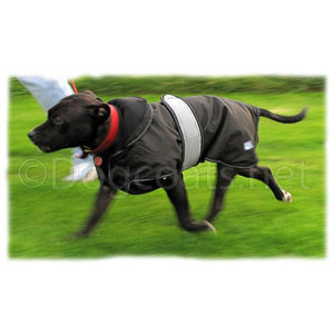 staffy running wearing 2 in 1 ultimate dog coat with removable lining