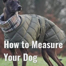 Load and play video in Gallery viewer, Quilted Waterproof Whippet Coat with High Collar Design Your Own