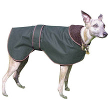 Load image into Gallery viewer, Wax Greyhound / Whippet Coat Green