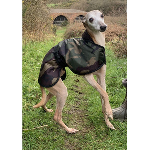 Joey loving his whippet coat. Fleece lined and waterproof whippet coats uk