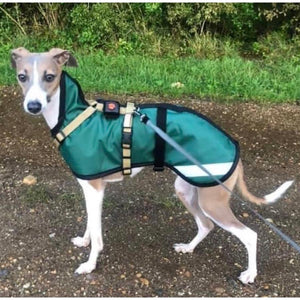 Italian greyhound coat with harness over the top