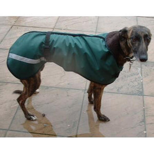 Echo the greyhound wearing our waterproof lurcher coat in green
