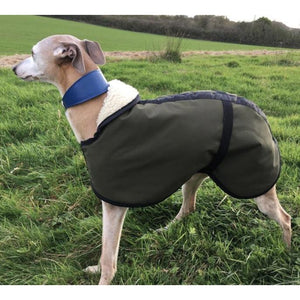 Olive green best winter whippet coats by dry dogs uk. Beautiful whippet jacket for cold weather. stylish and fashionable as well as cut to fit your whippet perfectly.