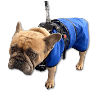waterproof dog coat with chest protection and a harness over the top royal blue