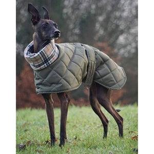 the trendy greyhound coat for italian greyhounds. available in whippet and greyhound sizes too.