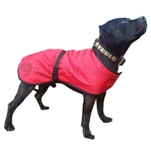 Load image into Gallery viewer, staffy coat in red. protection from rain, cold, sharp thorns