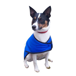 jack russell dog coat in royal blue. waterproof shell and fleece lined