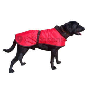 red dog coat on black labrador waterproof ideal for winter