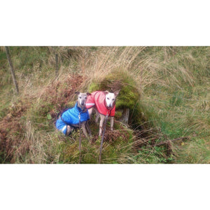 Two of our customers whippets in the matching whippet coats with reflective