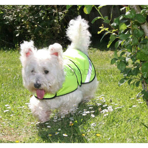 Westie wearing summer lightweight reflective dog coat | DryDogs.co.uk
