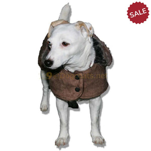 Small dog coats for jack russell border terrer westie etc | DryDogs