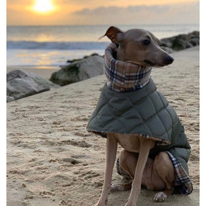 Sunset on the beach. Olive Quilted whippet/greyhound coat