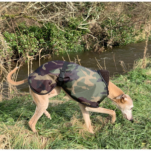 By the river - Joey the whippet in his waterproof camouflage whippet coat with head down
