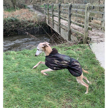 Load image into Gallery viewer, Whippet leaping and jumping wearing a DryDogs whippet coat