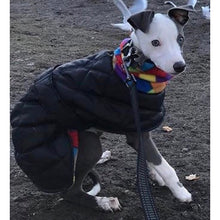 Load image into Gallery viewer, whippet puppy coat