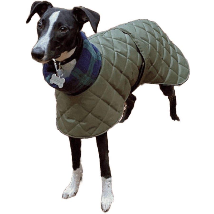 Quilted whippet coat. Waterproof. Suitable for all sighthounds including greyhounds