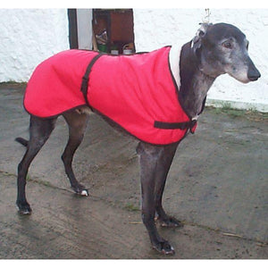 Zoom wearing a red greyhound coat with fleece lining for warmth