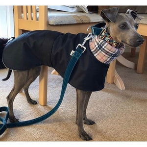 The Trendy Whippet Dog Coat. Perfect for winter weather. Design you own. With harness hole